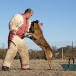 un professionnel pour éduquer votre chien
