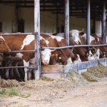 Les avantages d'opter pour la farine de paille en tant que litière