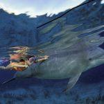 plongée avec les dauphins